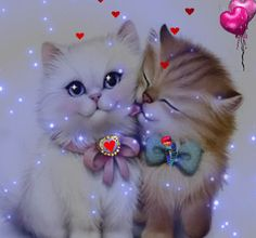 Süß: Daizo und Janna💞👫 - New Ideas Butterfly Wallpaper, Love Wallpaper, Kittens Cutest, Cats And Kittens, Image Chat, Beautiful Gif, Love Pictures, Cat Gif, Cute Baby Animals