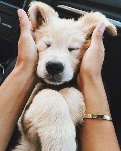 Hanalei - Eva Gutowski's Dog