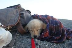 Puppy in a flannel. Awesome.