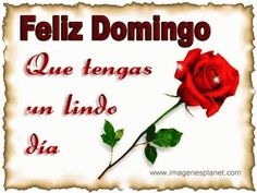 The perfect FelizDomingo Rose Sparkle Animated GIF for your conversation. Discover and Share the best GIFs on Tenor. Feliz Domingo Gif, Rose, Gifs, Snoopy, Angel, Animation, Google, Ideas, Friendship Sms