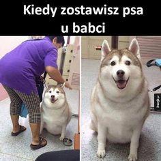 Ale tłuścioch XD Wbijajcie do Sklepu Dzika. Kubki już od 17 zł!  Link też w bio! http://ift.tt/1UxGFVD . #polskadziewczyna #film #melanż #koteł #kocham #książka #suchary #miłość #suchar #dziewczyna#chłopak #nudy #beauty #kocur #szkola #łóżko #piesek #love #pieseł #polska #dziewczyna #kotek #kot #polishgirl #warszawa #pies #randka by dzikjestdziki