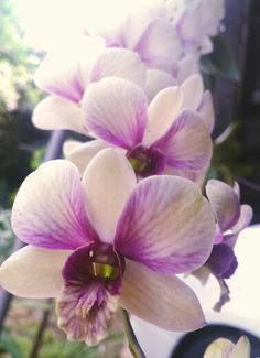 #Orchid Thailand