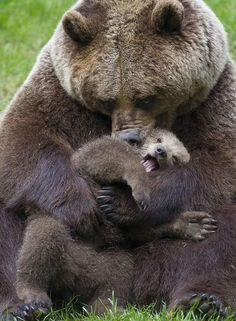 Every animal loves their babies, except three: Mice, Pandas are Humans. Humans are the worst animal, Ever! Nature Animals, Animals And Pets, Wild Animals, Beautiful Creatures, Animals Beautiful, Cute Baby Animals, Funny Animals, Baby Animals Kissing, Animal Babies