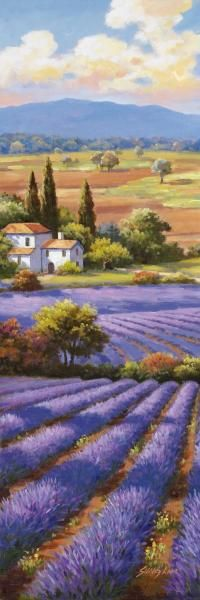 Sung Kim - Fields Of Lavender II - Fine Art Print - Global Gallery
