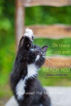 Attention: Foster homes needed! It's kitten season - In Between The Blinks