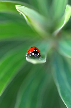 Ladybug~~