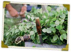 #Wildtaiga #Summer #Sauna #Birch twigs Birch, Herbs, Summer, Summer Time, Summer Recipes, Herb