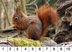 Full HD Wallpaper squirrel branch fluffy blurry background from the category animals. Animal Activities For Kids, Autumn Activities, Animal Projects, Animal Crafts, Animals And Pets, Cute Animals, Maths Puzzles, Red Squirrel, Widescreen Wallpaper