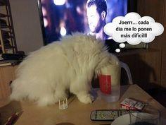 La curiosidad del Gato jejejeje