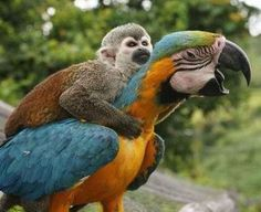 monkey & macaw. . . wow, wow and wow, my Macaws love to play with my dogs, but this pic really stuns me. ~Pam