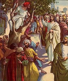Zacchaeus climbed a sycamore tree to get a better look at Jesus as He was passing through Jericho.