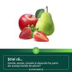 Natur House, Healthy Tips, Health Fitness, Food, Culture, Plant, Essen, Meals, Fitness
