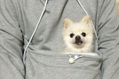 PRE-ORDER Mewgaroo Hoodie with Pet Pouch