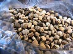 quality ginseng seeds is an important step in how to grow ginseng Veg Garden, Fruit Garden, Veggie Gardens, Vegetable Gardening, Garden Beds, Growing Tomatoes, Growing Herbs, Growing Ginseng, Ginseng Plant