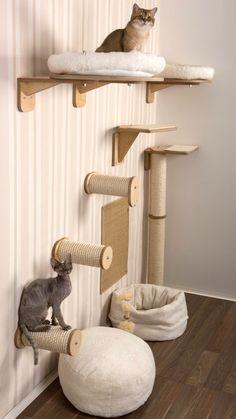 Cat Climbing Wall, Cat Wall Furniture, Furniture Ideas, Cat Wall Shelves, Cat Gym, Cat House Diy, Diy Cat Tree, Cat Playground, Playground Design
