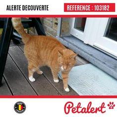 14.11.2016 / Chat / Aywaille Sougné-Remouchamps / Liège / Belgique