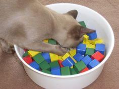 Trend Cat activity game
