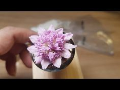 Can you feel the little stars? Buttercream Flowers Tutorial, Frosting Flowers, Cake Piping Techniques, Royal Icing Piping, Buttercream Cake Decorating, Flower Video, Cake Decorating Videos, Astrantia Major, Flower Food