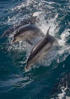 Wild Dolphin Play by Steve Brown on 500px