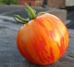 Red Zebra Tomato, 25 seeds, flashy red cherry with orange stripes, showstopper,  tangy flavor, large crops, open pollinated, easy to grow