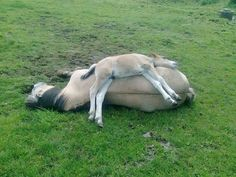 Saw this on Facebook today!  So cute!  Mama and baby horse