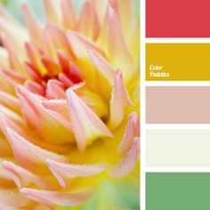 The combination of warm yellow, coral and soft green with light pink shades makes this flower palette. This color solution is perfect for weddings and can be used for both decoration of holiday premises and dresses of bridesmaids.