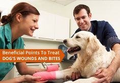 Dog Broken Nail Vet Cost New the Cost Veterinary Care Pets Training and Boarding<br> Veterinary Surgeon, Veterinary Care, Veterinary Technician, Training Tips, Dog Training, Becoming A Veterinarian, Dog Doctor, Animaux, Change Management