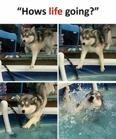Got dumped so heres a dump Funny Images lol funnypics humor. - Got dumped so heres a dump Funny Images lol funnypics humor. The post Got dumped so heres a dump Funny Images lol funnypics humor. appeared first on Gag Dad. Funny Dog Memes, Funny Animal Memes, Cute Funny Animals, Funny Relatable Memes, Funny Animal Pictures, Cute Baby Animals, Funny Cute, Funny Images, Funny Dogs