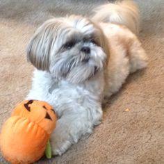 Pumpkin? #cutie
