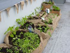 a viable alternative to potted plants