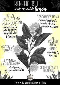 El aceite esencial de limón es uno de mis favoritos. Este aceite se extrae prensando al frío la cáscara del limón y no el fruto interno. Beneficios y usos