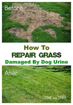 A natural way to repair brown grass from dog urine for How to fix dog urine spots on lawn