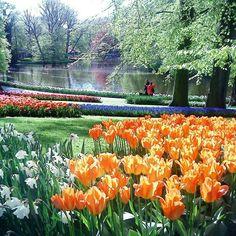 Somewhere in the world... ▫ ▫ ▫ #flowers #colors #life #lifestyle #travel #world #worldtour #worldtrip #architecture #instagood #instatravel #instadaily #amazing #funny #trip #insta #happy #solotravel #photo #flowers #photography #tripstagram #nature  #roundtheworld #tulips #me #keukenhof #friday #eduardoluca