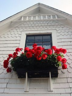 Charm ~ complete with red geraniums in a window box