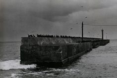 The Solitude of Ravens (1975-1985) By Japanese photographer Masahisa Fukase (1934-2012)