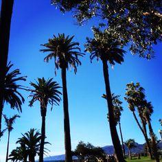 Hollywood Palm Trees, Hollywood, LA, CA, US