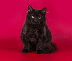 a beautiful kitty