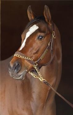 Untapable - She wins again!  The Mother Goose Stakes 2014, was a cakewalk for her.  Bring on the colts!!