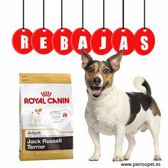 ¡¡Los #perros de raza Jack Russell están de enhorabuena ya que su pienso está rebajado en #PiensoPet!!