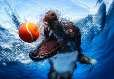 Underwater Dog Photography. These pics are my favorite!