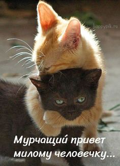 Easy Cute Baby Animals To Draw Step By Step off Good Morning Cute Animals Gif down Pictures Of Cute Animals Gif Kittens Cutest, Cats And Kittens, Cute Cats, Funny Cats, Black Kittens, Funny Cat Compilation, Funny Cat Videos, Cute Animal Videos, Funny Animal Pictures