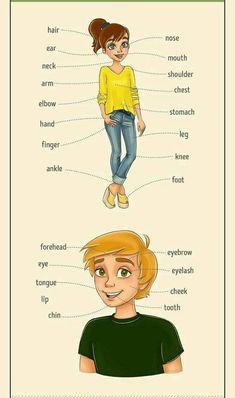 vocabulaire corps humain en anglais