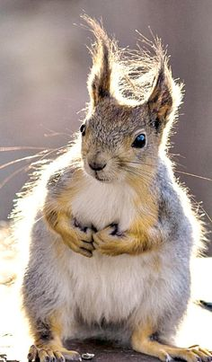 "Even squirrels have ""bad hair days."""