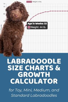 F1b Labradoodle, Labradoodles, Puppy Growth Chart, Puppy List, 5 Month Olds, New Puppy, Dog Grooming, Dog Life, Kids And Parenting