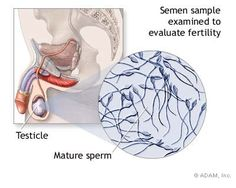Do you really suffer from premature ejaculation problem? Share your problems on our blog and listen to other men that already increased their sperm count using natural herbal pills like Semenax. It's something you worth to try, because you can't feel your sexuality without a healthy semen production