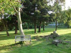 další... Outdoor Furniture, Outdoor Decor, Park, Plants, Parks, Plant, Backyard Furniture, Lawn Furniture, Planets