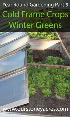 Year Round Gardening Series - Cold Frame Crops is part 3 of our winter gardening series. Lean what greens you can grow in winter in a cold frame! Greenhouse Interiors, Backyard Greenhouse, Small Greenhouse, Greenhouse Ideas, Pallet Greenhouse, Winter Greenhouse, Cool Baby, Hydroponic Farming, Hydroponics