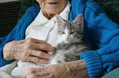 Help a senior care for their kitty - get them Cats Desire litter boxes at www.catsdesire.com