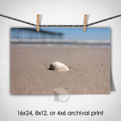 """Beach house decor a Lonely Sea Shell on the Beach Photograph Coastal Nautical Art Photo Print by CoastalFocusArt 
