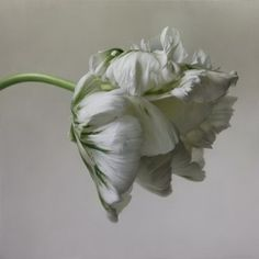 """Igor Levashov - """"Parrot Tulip I"""" Oil Painting -  47"""" x 47"""""""